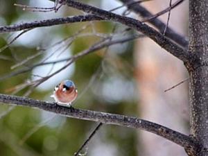 Экскурсия для любителей птиц в Ижевске