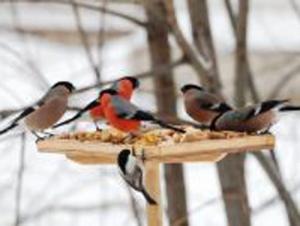 Международный детский экологический конкурс «Помоги птицам»