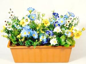 Выставка «Сад наподоконнике: всё окомнатных растениях»