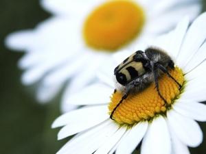 Детский экологический конкурс «В мире цветов и насекомых»