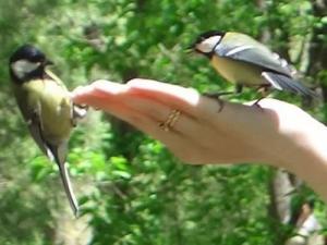 Конкурс экологической журналистики «В гармонии с природой»