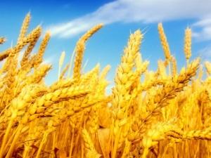 Выставка «Интенсификация производства зерновых культур»