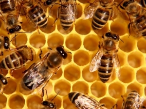 Семинар в рамках лектория «Основы пчеловодства»