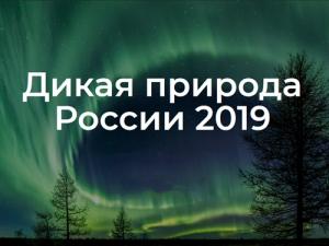 Фотоконкурс «Дикая природа России– 2019»