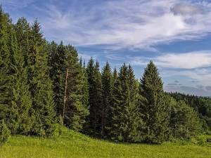 Книжная выставка к Дню работников леса и лесоперерабатывающей промышленности