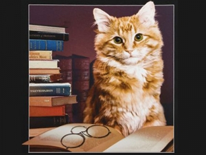 «Библиотечный» кот ивсе-все-все