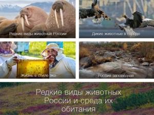 Конкурс фотографии «Редкие виды животных России исреда их обитания»